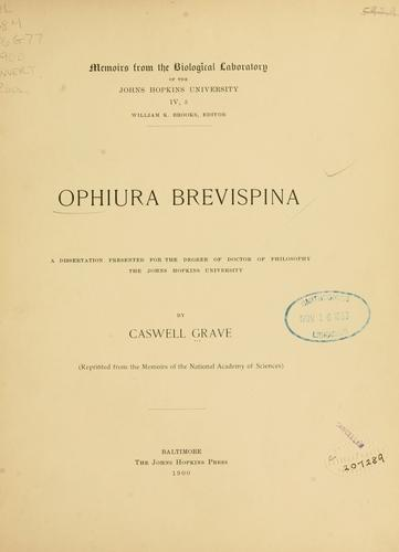 Ophiura brevispina by Caswell Grave